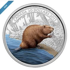 2015 20 Fine Silver Coin 1 oz Beaver at Work 15 RCM Royal Canadian Mint Calgary, Canadian Things, O Canada, Canada Post, Canadian History, Old Money, Proof Coins, World Coins, Dollar Coin