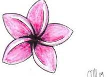 plumeria tattoo designs - Bing Images- I like this flower shape, but different colors