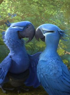 Who hasn't seen the movies of Rio? Did you know the story of Rio was based on a true story of the conservation program for the Spix's Macaw?