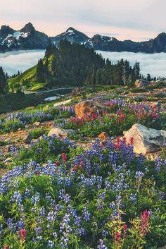 Flowerfield ♥
