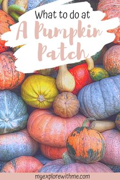 Find out all about the best pumpkin patch in San Diego California in this complete guide to Bates Nut Farm San Diego. This is the perfect way to enjoy fall in San Diego and one of the best things to do in San Diego in fall. Enjoy the fall activities and fall photography spots at one of the best San Diego pumpkin patches. | bates nut farm photography | bates nut farm pumpkin patches | san diego pumpkin patch | pumpkin patches in san diego Fall Vacations, Vacation Places, Visit California, California Travel, Beautiful Places In Usa, Amazing Places, Travel Inspiration, Travel Ideas, Travel Tips