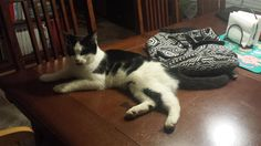 Found Cat - Unknown - Flowery Branch, GA,  on March 05, 2016 (23:00 PM)Do you know this Cat? #FloweryBranch (Spout Springs & 985)  #GA 30542 #Hall Co. , #Found #Cat 03-05-2016!, Gender: Unknown #Unknown White/black/VERY friendly cat, litterbox trained, drinks from faucet, loves to be petted. CONTACT johnxlaura@aol.com  To see this pet's location on the Helping Lost Pets Map: http://www.helpinglostpets.com/v2/?pid=1035429 More Info: http://www.helpinglostpets.com/petdetail/?id=1035429