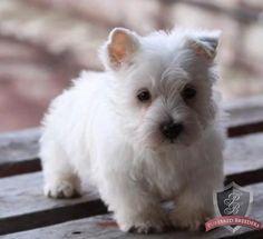 Monty :-) So cute...