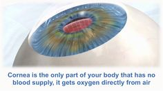 Cornea receives no blood supply from the human body. Our DYK series is not a quiz, or a test, just a fun fact of the day spruced up with high quality graphics http://www.scientificanimations.com/did_you_know/blood-supply-cornea/ #ScientificAnimations #DidYouKnow #ThursdayDidYouKnow #Cornea