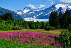 Shop for Mendenhall Glacier Wallpapers in Nature & Landscapes Theme Wallpapers. Custom printed to fit your walls. Free Shipping in India.