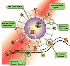 Nanotechnology used to Kill Cancer Cells Nanocells