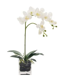 Natural Decorations, Inc. - Orchid Phalaenopsis | Glass Cube | Cream White
