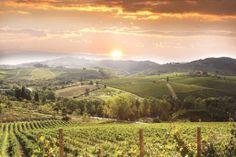 Montalcino en la Toscana. Buen beber.