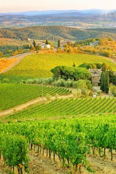 From the lavender fields of Provence to the vineyards of Franconia, Germany, these romantic countryside escapes in Europe are all about slowing down. Cabernet Sauvignon, Italy Vacation Packages, Die Renaissance, Italy Travel, Italy Trip, Sunset Landscape, Tuscany Landscape, Tuscany Italy, Italy Italy