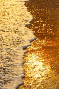 Golden hour at the beach. Gold Aesthetic, Aesthetic Colors, Aesthetic Pictures, Apollo Aesthetic, Aesthetic Food, Aesthetic Vintage, Beach Foto, Ed Wallpaper, Picture Wall