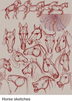 Horse sketches... I love horses! Cheval