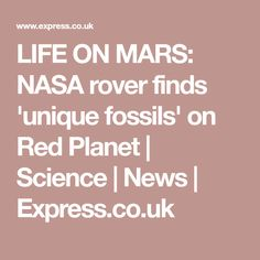 LIFE ON MARS: NASA rover finds 'unique fossils' on Red Planet   Science   News   Express.co.uk