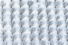 Snow acts as a white seamless background for the landscape.