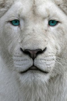 wow! photo of lion
