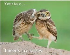 Quotes Funny Owl - Bing images