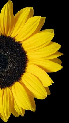 Sunflower makes people feel warm.When you feel depressed, set sunflower as the wallpaper of your mobile phone, and you will think of the bright sunlight. Flor Iphone Wallpaper, Sunflower Iphone Wallpaper, Black Phone Wallpaper, Watch Wallpaper, Iphone Background Wallpaper, Emoji Wallpaper, Aesthetic Iphone Wallpaper, Cellphone Wallpaper, Nature Wallpaper