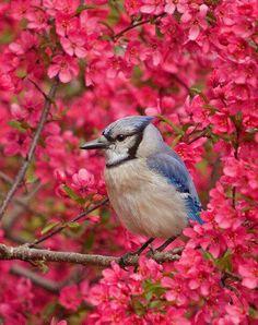 Gorgeous bird pic