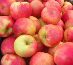 Honeycrisp Apples - The Honeycrisp apple, aka the most delicious apple in all the land, was invented at the University of Minnesota.