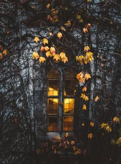 Find images and videos about beautiful, nature and yellow on We Heart It - the app to get lost in what you love. Autumn Aesthetic, Autumn Cozy, Autumn Photography, Windows, Autumn Inspiration, Storyboard, Fall Halloween, Halloween Quotes, Autumn Leaves
