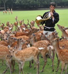 It's amazing how animals respond to this French horn playing.  Look at the animals in the background coming over to see whats happening!  If I had pet deer, I would play music for them!