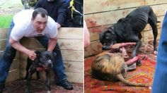 Stop Russian dog fighter from hurting more animals! | YouSignAnimals.org