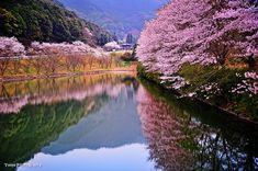 Spring in Japan by Windylife. Artists description: I was driving from Takeo to Ureshino in Saga, then I found a beautiful pond with cherry blossoms. Though the weather was not so good but I enjoyed shooting, and I had forgotten all about the time.