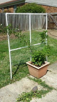 My Raspberry Trellis. Made By NEV. Please Keep Link When Pinning.