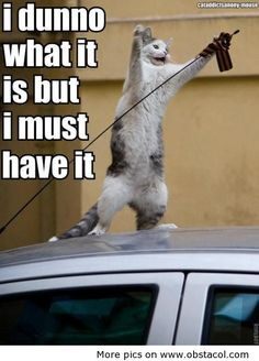 This is a picture of a cat doing something unusual that has been captioned. You are on the Internet. End of discussion.
