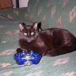 black cat and blue on the joystick playstation