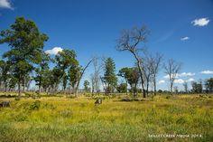 Oak Savannah restoration at Necedah National Wildlife Refuge - http://www.devilslakewisconsin.com/2014/09/19/backyard-explorer-necedah-national-wildlife-refuge/