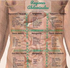 Medical Art, Medical School, Medicine Notes, Medical Anatomy, Muscle Anatomy, Med Student, Medical Information, Midwifery, Med School