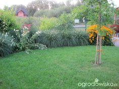 Wizytówka - Grembosiowo - Forum ogrodnicze - Ogrodowisko