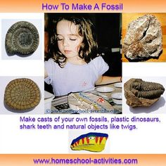 Make a fossil for kids.
