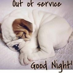 Good night sweet dreams my friend and rest well may God bless you and your family. Good Night Greetings, Good Night Messages, Good Night Wishes, Good Night Sweet Dreams, Good Night Funny, Good Night Image, Good Morning Good Night, Good Night Sleep, Funny Good Night Pictures