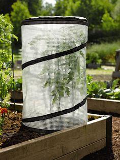 Love this idea for extending the growing season. Pop-Up Tomato Accelerator - Mini Greenhouse | Gardeners.com