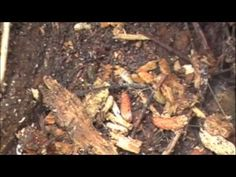 Nitrogen Cycle & Life Around a Log. Great video close-ups of squirmy bugs contributing to decomposition of this particular log.