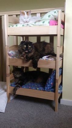 The Duktig doll bed can also serve as a cute bed for your cat. If you have more than one, you can screw multiple Duktigs together, one on top of the next.