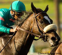Zenyatta @ Horsechannel.com