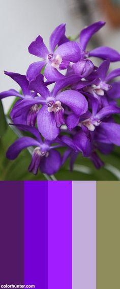 Vanda Thai Sky Color Scheme from colorhunter.com