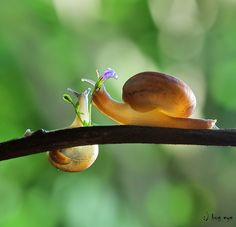 for you :)--Thai snail