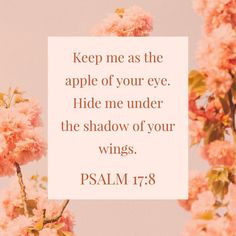 """""""Wondrously show Your lovingkindness, O Savior of those who take refuge at Your right hand From those who rise up against them. Keep me as the apple of the eye; Hide me in the shadow of Your wings"""" Psalms NASB Encouraging Bible Verses, Inspirational Verses, Bible Encouragement, Bible Verse Art, Biblical Quotes, Favorite Bible Verses, Religious Quotes, Bible Verses Quotes, Bible Scriptures"""