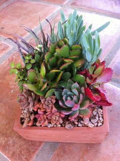Succulent Potted Planter by SucculentOasis on Etsy, $25.00