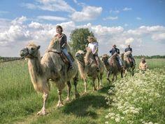 Ausflug Muttertag Kamel reiten Brandenburg