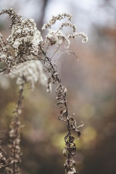a glimpse of winter's grace | by Satirenoir