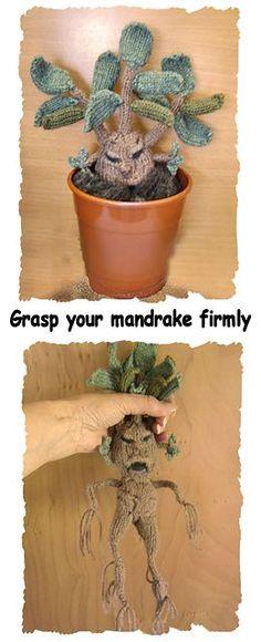 Mandrake Plant by Phoeny