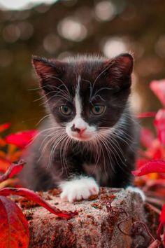 Herfst katjes werden altijd ziek volgens mijn opa, maar uiteindelijk heeft mijn herfstkatje een heerlijk lang leven gehad