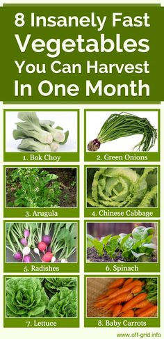 8 Insanely Fast Vegetables You Can Harvest In One Month►►http://off-grid.info/blog/8-insanely-fast-vegetables-you-can-harvest-in-one-month/?i=p