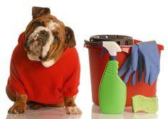 10 Dicas de limpeza que todo dono de cachorro devia saber.