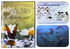 """WILDLIFE SYMPHONY DVD - A Musical Celebration in Nature.  15 classical selections """"choreographed"""" by the animal kingdom! Swim with the dolphins and whales as they swirl to Debussy's Reflections on the Water.Antarctic penguins playfully romp to Bizet's Children's Games, and more. A favorite since its introduction. 48 min."""