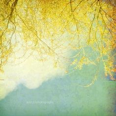 Soft yellow willow leaves sway in the breeze, against a pale aqua and cloudy sky; vintage style photograph.    TITLE: Willow